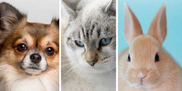 犬、猫、うさぎのペット写真