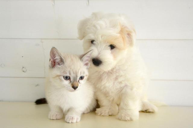 ペット用のメモリアルグッズ【PetCharm(ペットチャーム)】~世界でただ一つ、ペットの毛でつくるオリジナルアクセサリー~